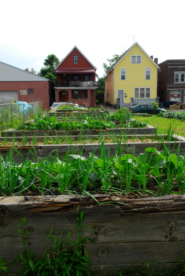 Massachusetts Avenue Project - Growing Green Garden